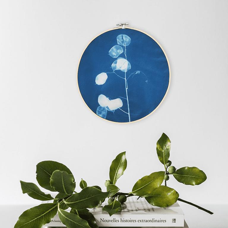 Cianotipo con lunaria, decorazione da parete